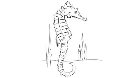how-to-draw-a-Seahorse
