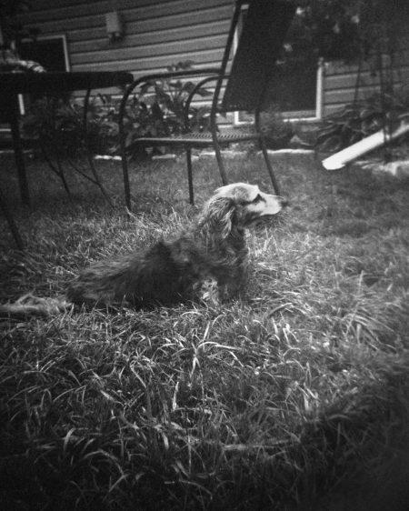 Daisy in the Long Grass - Olivia Smith