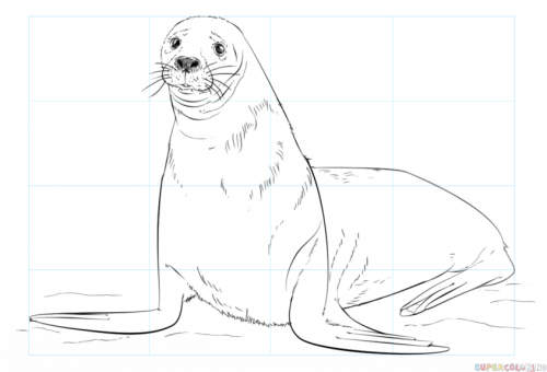 how to draw a brown seal