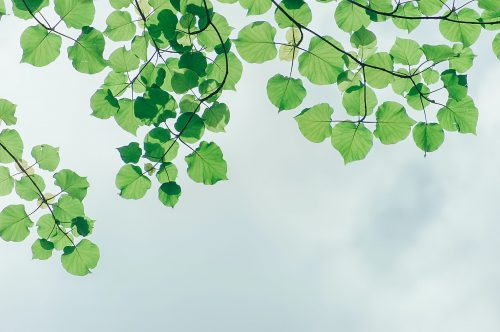 photography-of-leaves-under-the-sky-1131458